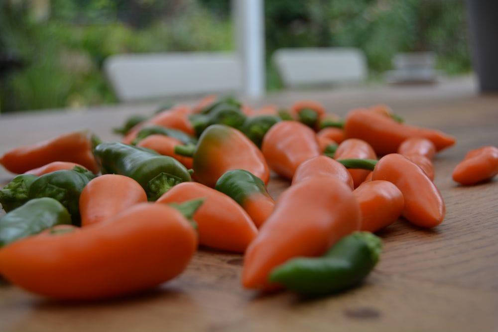 chili-oktober